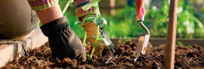 Биогумус: что за удобрение и как правильно его применять
