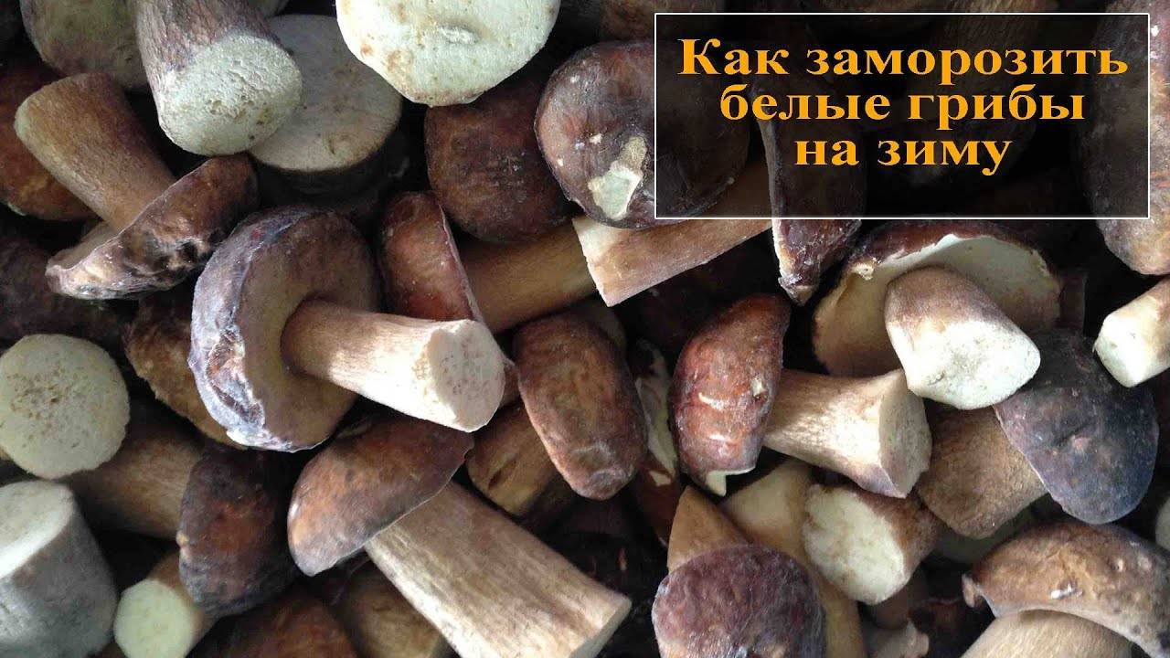 Правильная заморозка свежих белых грибов: рецепты предварительной подготовки к этой заготовке мороженных боровиков