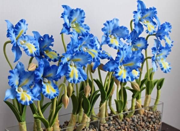 Как сделать синюю орхидею в домашних условиях, чем красят белые бутоны и видео, как получают крашенный цветок