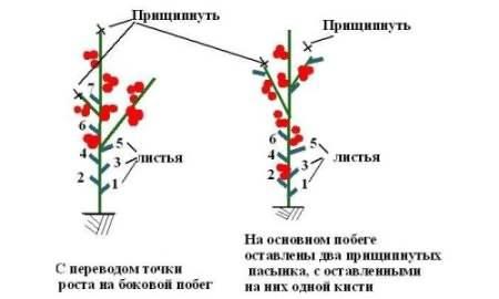 Как пасынковать помидоры в теплице правильно, схема пасынкования, сроки и время пасынкования, особенности пасынкования в теплице из поликарбоната русский фермер