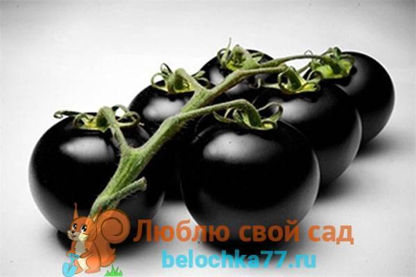 Лучшие, низкорослые, сладкие и другие сорта томатов черри для теплиц