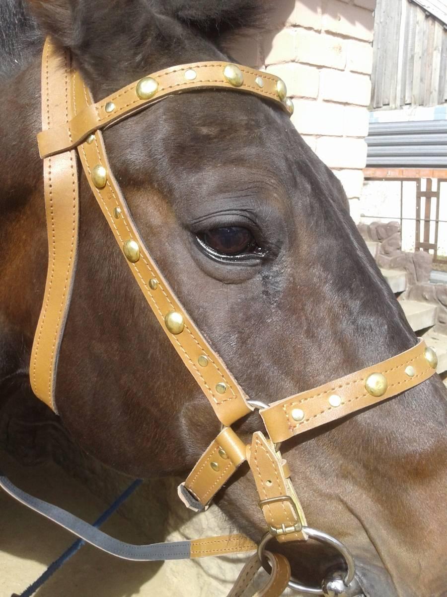 Простой способ сделать уздечку для лошади: пошаговая инструкция