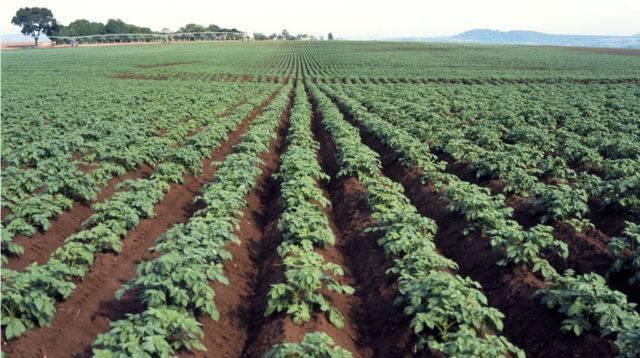 Что представляет собой препарат оксихом для обработки растений?