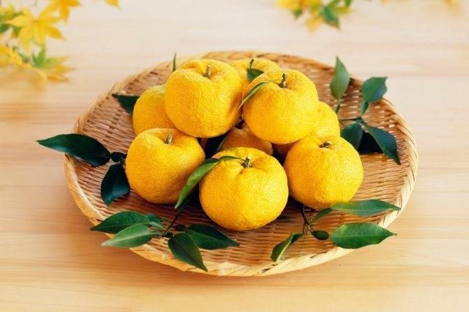 Лимон японский юзу (юдзу)