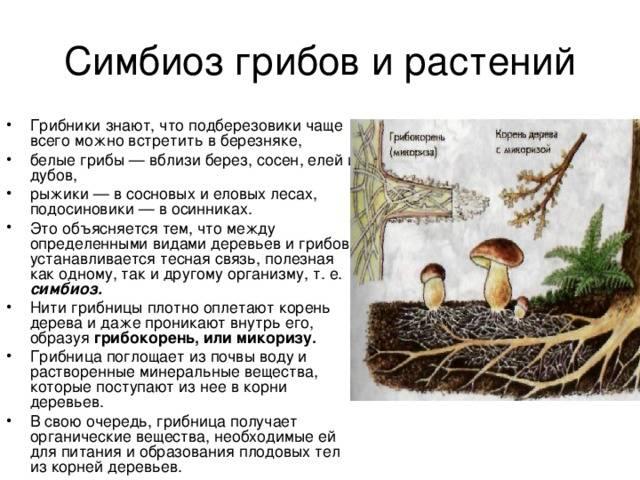 Микориза – симбиоз гриба и растения | allbreakingnews.ru