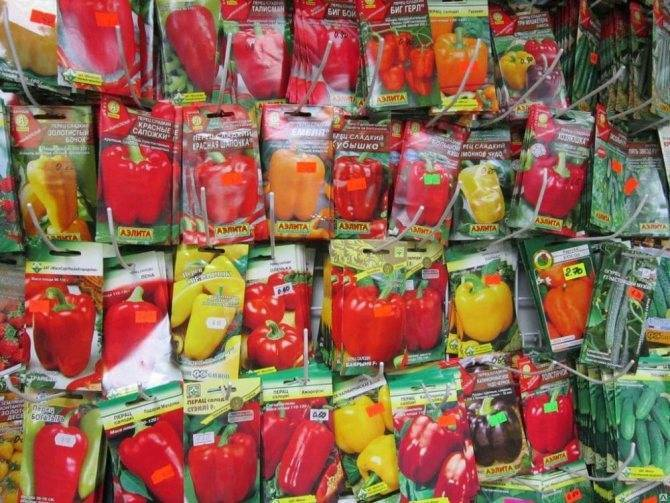 Выращивание болгарского перца в открытом грунте и теплице: агротехника, посадка рассады |