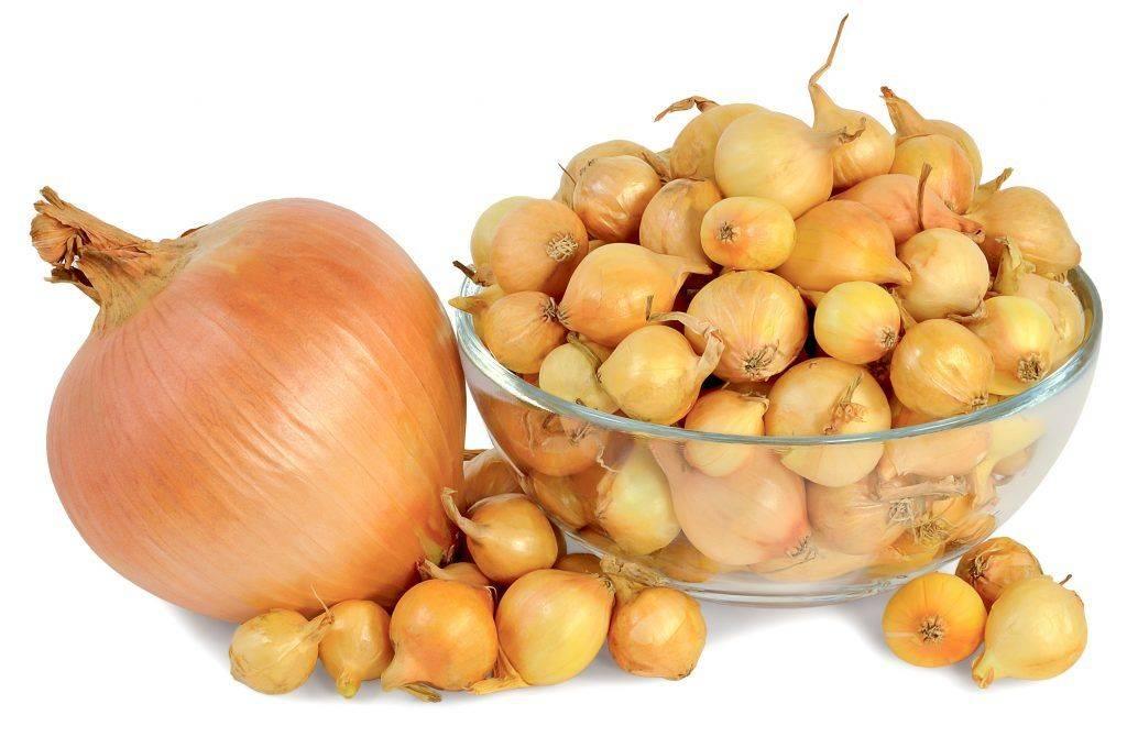 Лук бессоновский: характеристика и описание сорта, выращивание семян, посадка и уход
