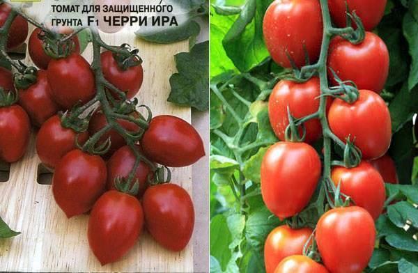 ᐉ томат «черри ира» f1: описание сорта, фото, особенности посадки и ухода за помидором - orensad198.ru