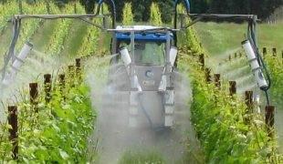 Полив винограда: когда и как правильно это делать. способы полива