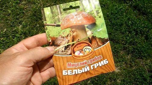 Как вырастить белые грибы в домашних условиях: выращивание на приусадебном участке, видео