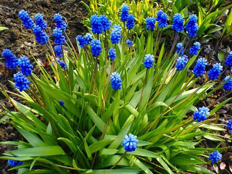 Многолетние цветы для дачи - 84 фото красивых идей оформления!