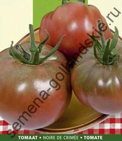 Описание среднераннего томата черный крым, выращивание в теплице и открытом грунте