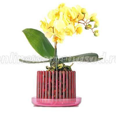 Необычный горшок «корона» для орхидей