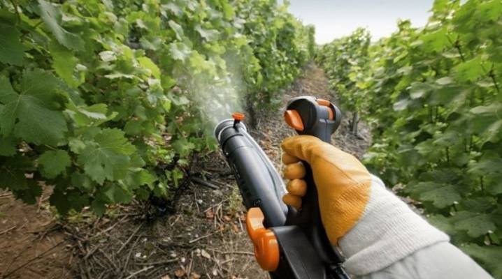 Обработка и опрыскивание винограда осенью железным купоросом