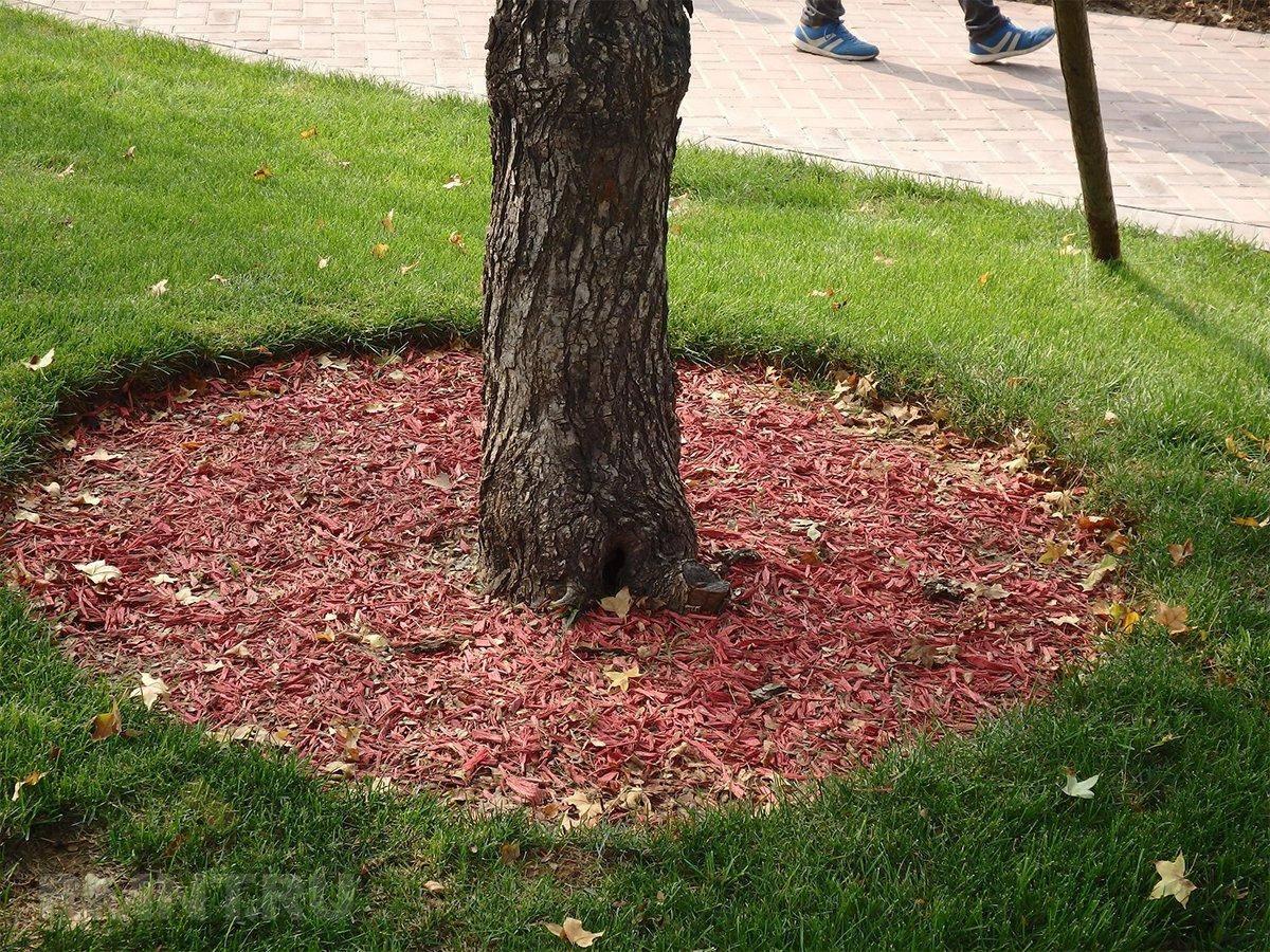 Нужно ли перекапывать приствольные круги плодовых деревьев. плюсы и минусы. правила — ботаничка.ru