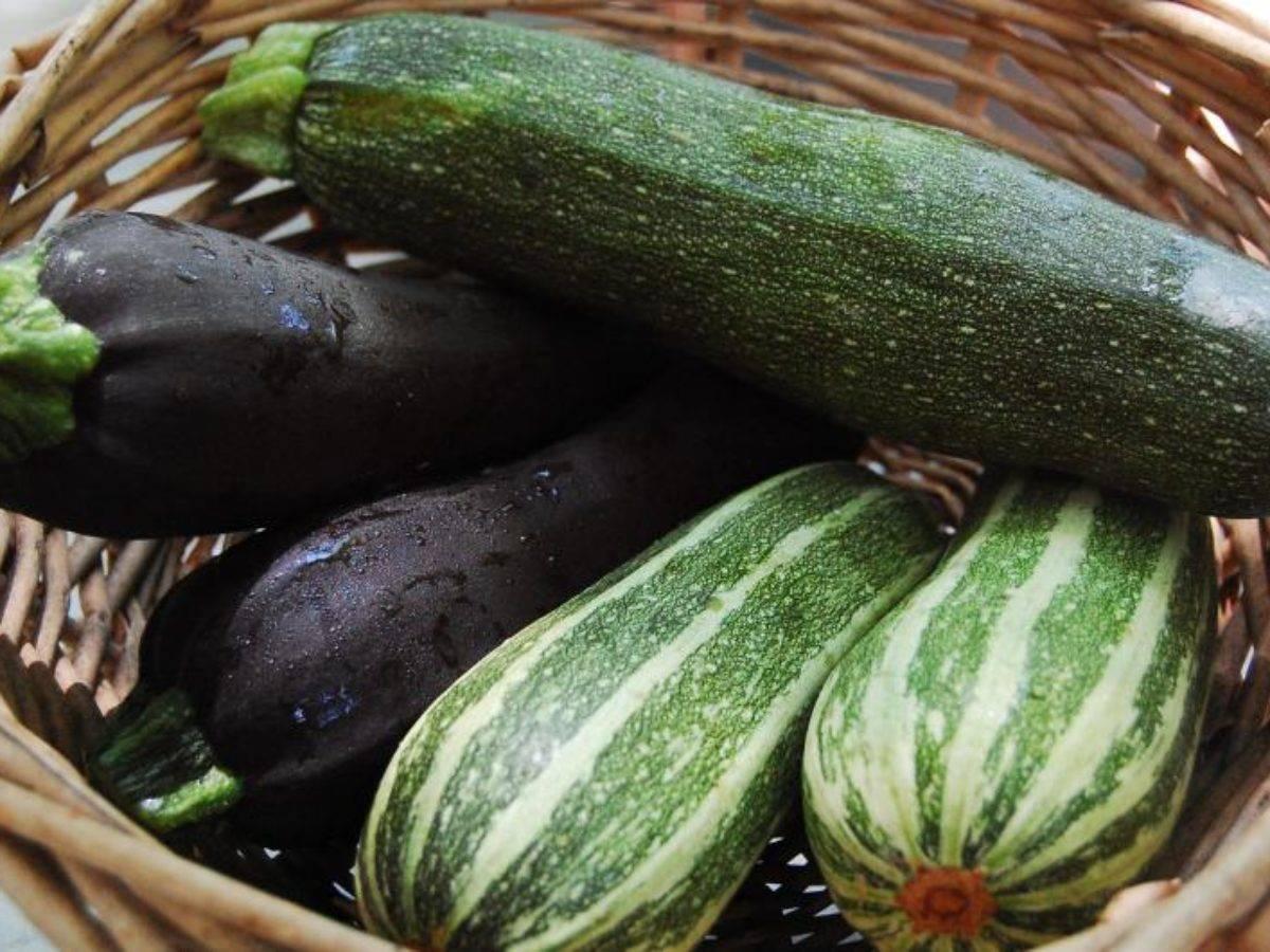 Круглые кабачки: описание лучших сортов, выращивание и урожайность с фото
