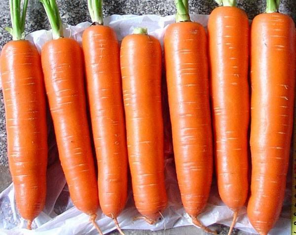 Морковь под зиму: когда сажать – сроки посадки и уход, когда сеять и какой сорт лучше в подмосковье и других областях