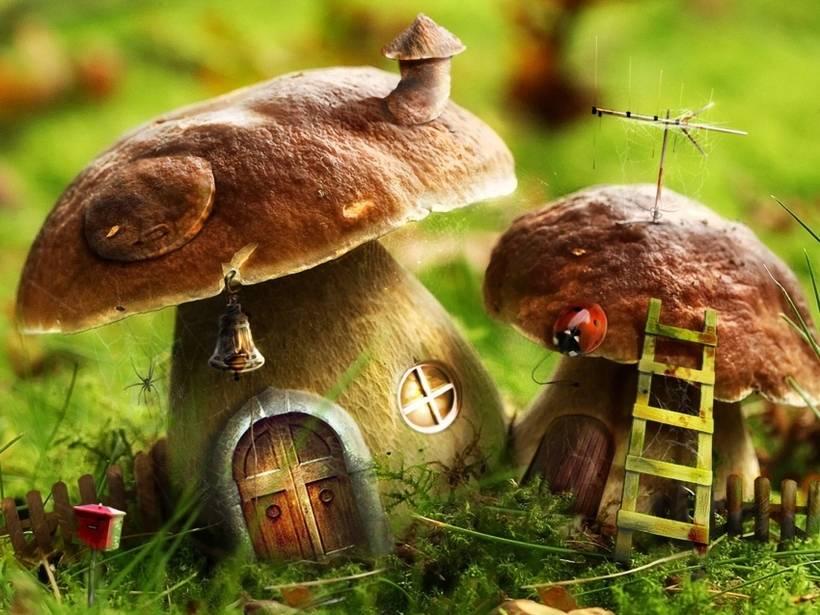 Животные, питающиеся грибами | vilingstore