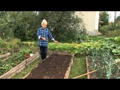 Когда подкормить картофель - сам себе сад