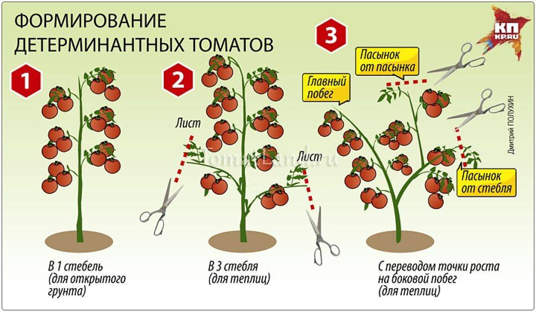 Томат верлиока: урожайность и характеристика сорта, отзывы