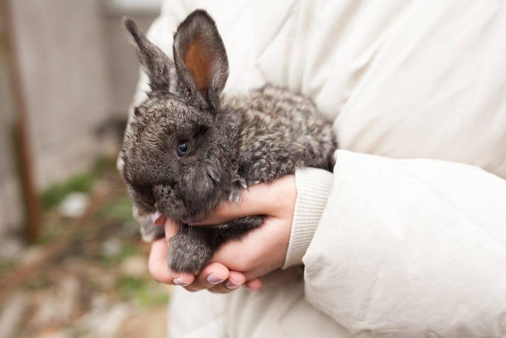 Искусственное осеменение кроликов в домашних условиях | продвижение сайтов в яндекс