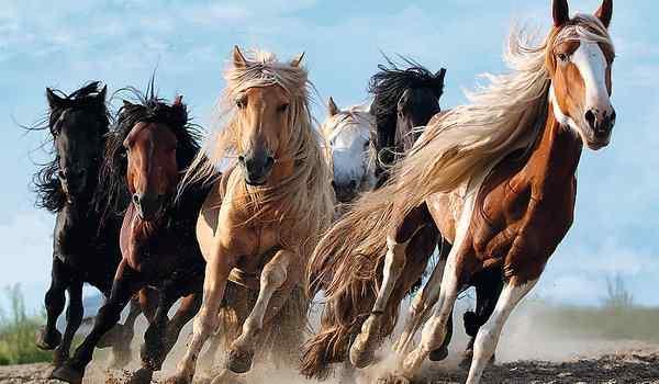 К чему снится лошадь, конь. видеть во сне лошадь, конь - сонник дома солнца