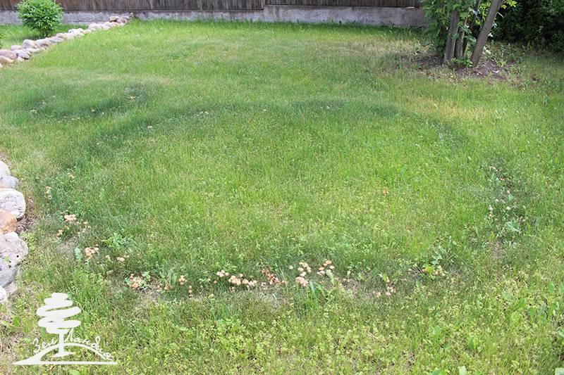 Методы и средства борьбы с грибами на газоне: препараты от поганок