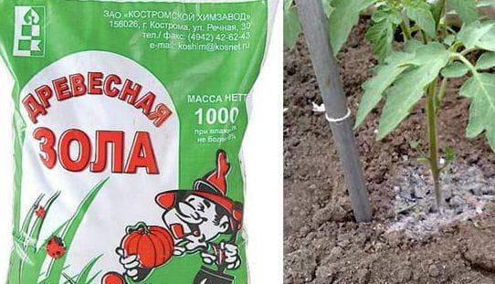 Подкормка рассады томатов золой – в домашних условиях, как применять в качестве удобрения