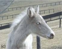 Кабардинская порода лошадей — история, описание, фото и видео. | cельхозпортал