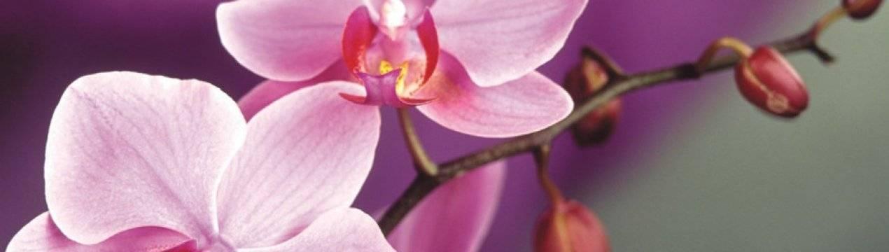 Почему у орхидеи опадают бутоны и ещё нераспустившиеся цветы? что делать в этом случае?