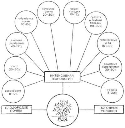 Основные принципы выращивания картофеля по традиционной и голландской технологиям | наш сад