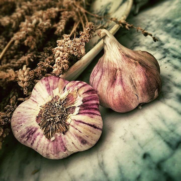 Сажаем озимый чеснок осенью: сроки, правила и рекомендации