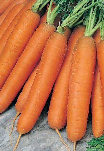 Морковь балтимор f1: характеристика и описание с фото, нюансы выращивания и сбор урожая, достоинства и недостатки, а также похожие сорта и отличие от других видов русский фермер