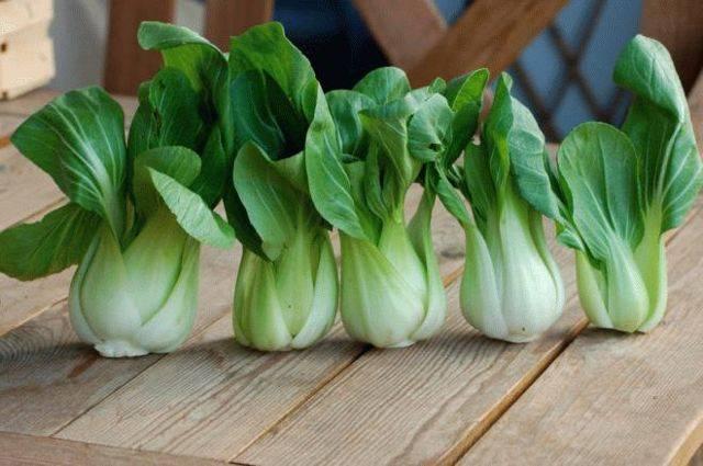 Китайская капуста пак-чой: выращивание и уход в открытом грунте