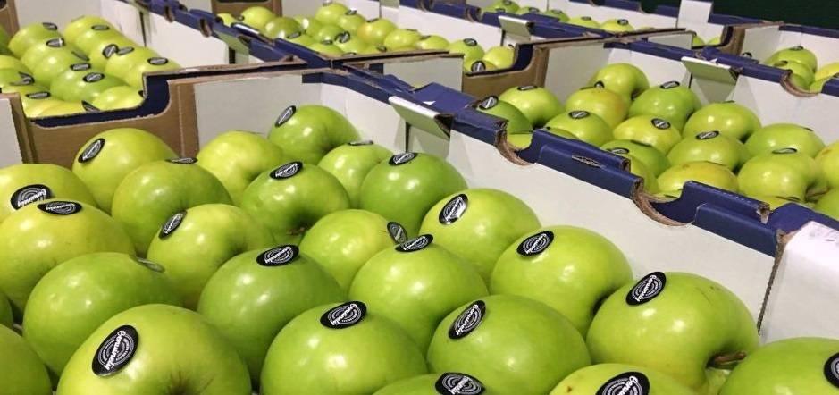 Яблоня гренни смит – 8 особенностей, правила посадки и ухода