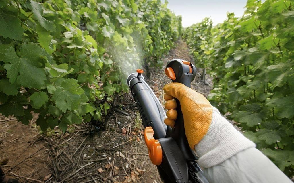 Ридомил голд мц: инструкция по применению для винограда