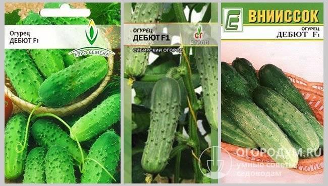 Огурец засолыч f1: отзывы, описание сорта и характеристика, посадка и уход