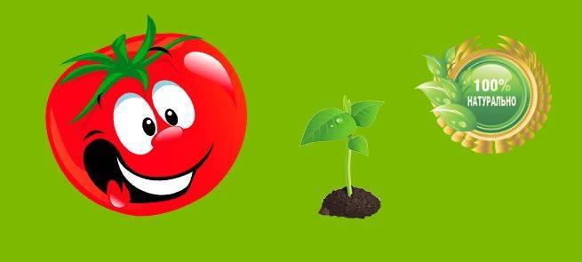 Сидераты весной: посев для улучшения почвы в огороде и в теплице перед посадкой томатов и других растений. когда перекапывают сидераты?