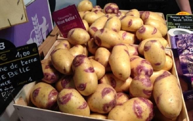 Картошка синеглазка характеристика агротехника выращивания - всё о землеводстве