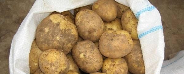Винета картофель: особенности