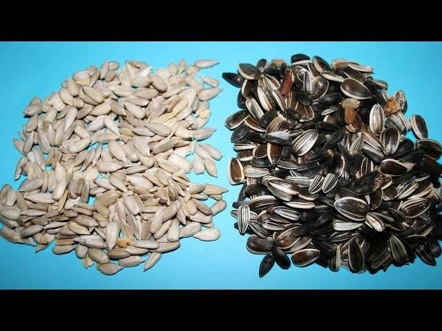 Как быстро почистить тыквенные семечки от кожуры в домашних условиях - сельская жизнь