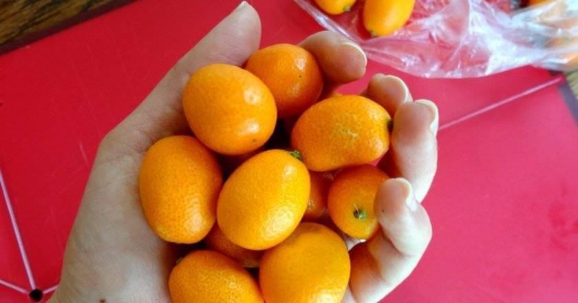 Кумкват — польза и вред, состав, калорийность, содержание полезных веществ. как едят кумкват, рецепты