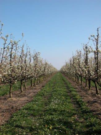 Пересадка яблони летом: советы бывалых о том, можно ли ее делать и как?