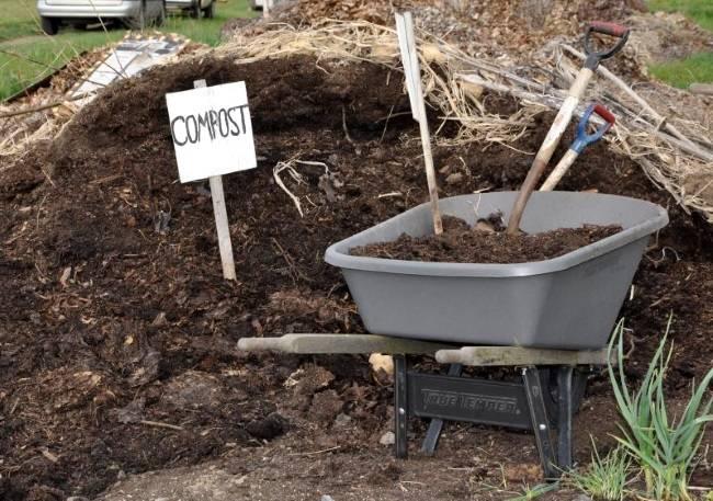 Голубиный помет для огорода. голубиный помет как удобрение: применяем в огороде разными способами