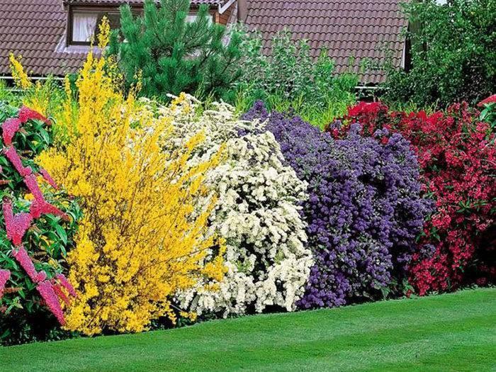 Неприхотливые вечнозеленые растения в вашем саду