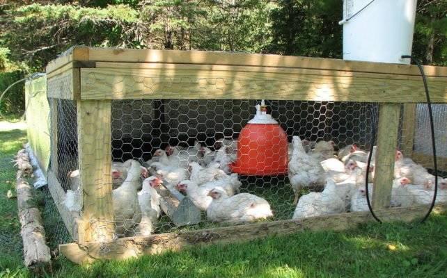 Как сделать кормушку для цыплят своими руками - инструкция по изготовлению