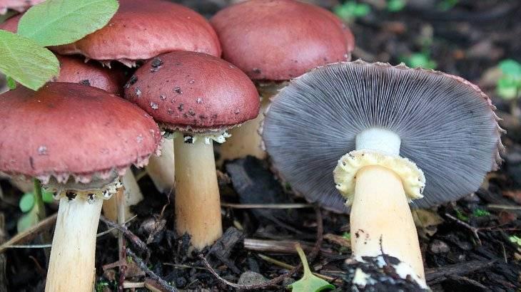 Самый большой гриб — в мире, на земле, в европе и россии