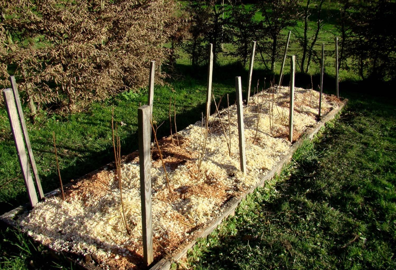Посадка малины весной: способы, выбор саженцев, советы новичкам