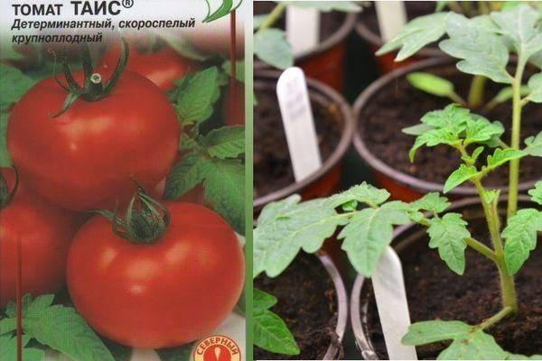 Томат туз: описание сорта, выращивание и уход, отзывы дачников с фото