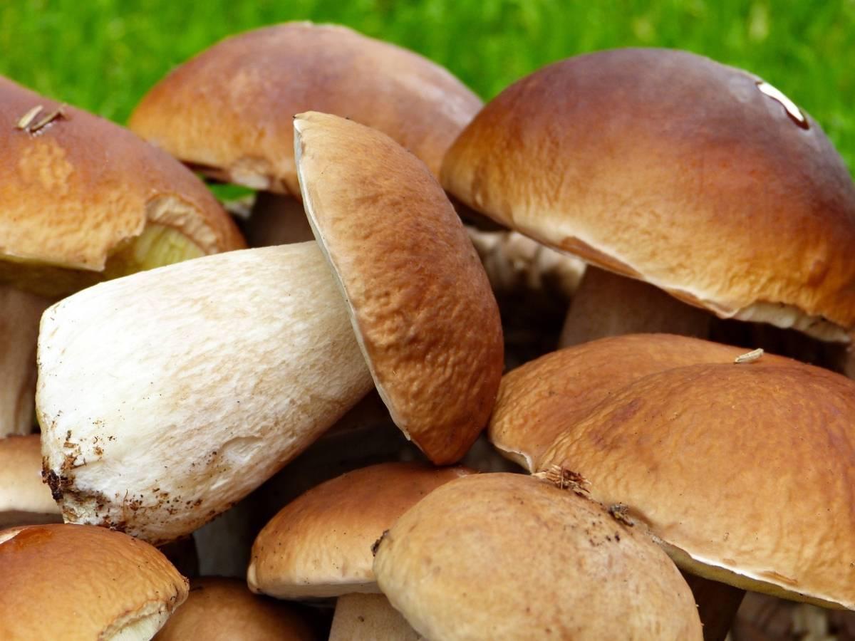 Как сушить белые грибы - мамин советник